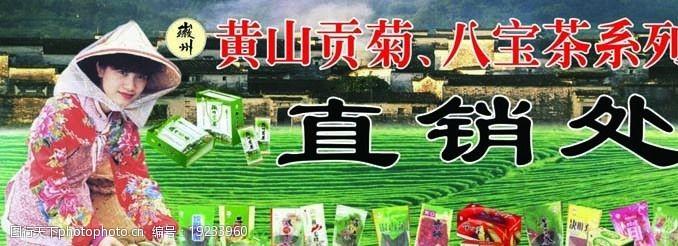 茶业包装采茶女采茶图片
